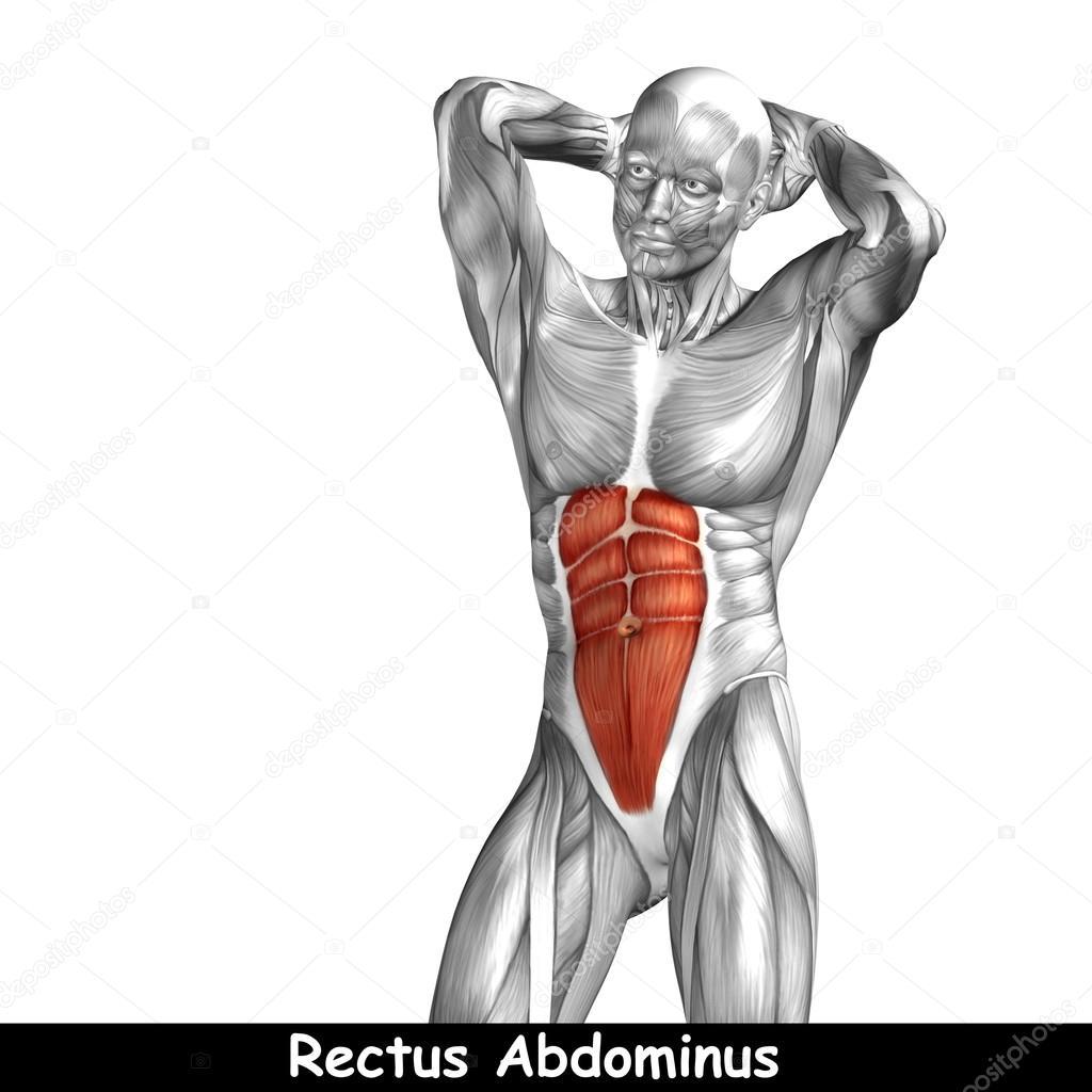 Menschliche Anatomie der Brust — Stockfoto © design36 #103631438