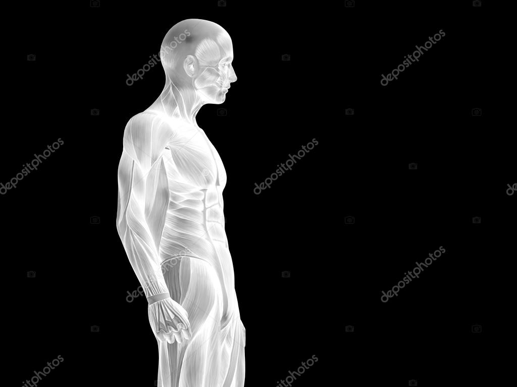 anatomy upper body with muscles — Stock Photo © design36 #105214584
