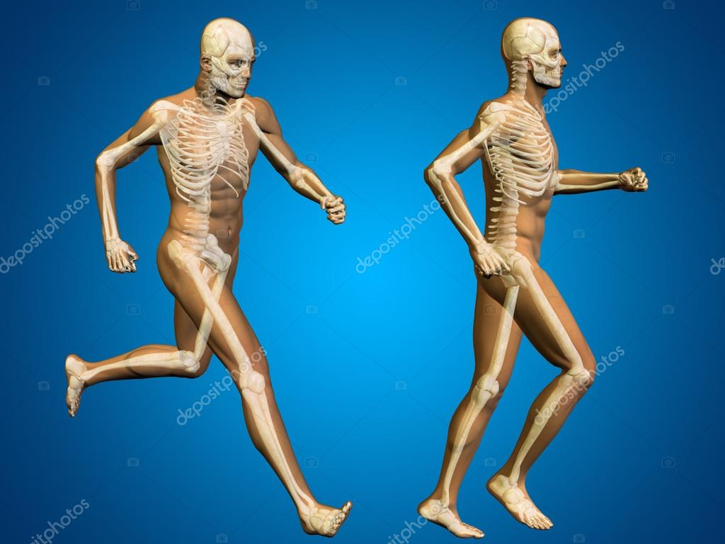 Anatomía del esqueleto masculino — Fotos de Stock © design36 #105216158