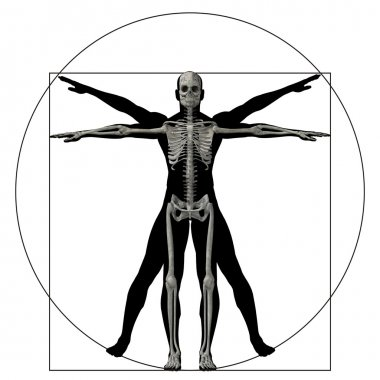 vitruvian human body