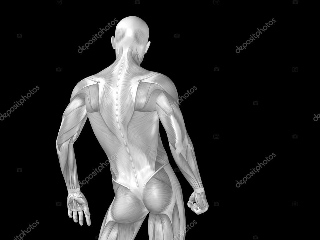 parte superior del cuerpo con los músculos anatomía — Foto de stock ...