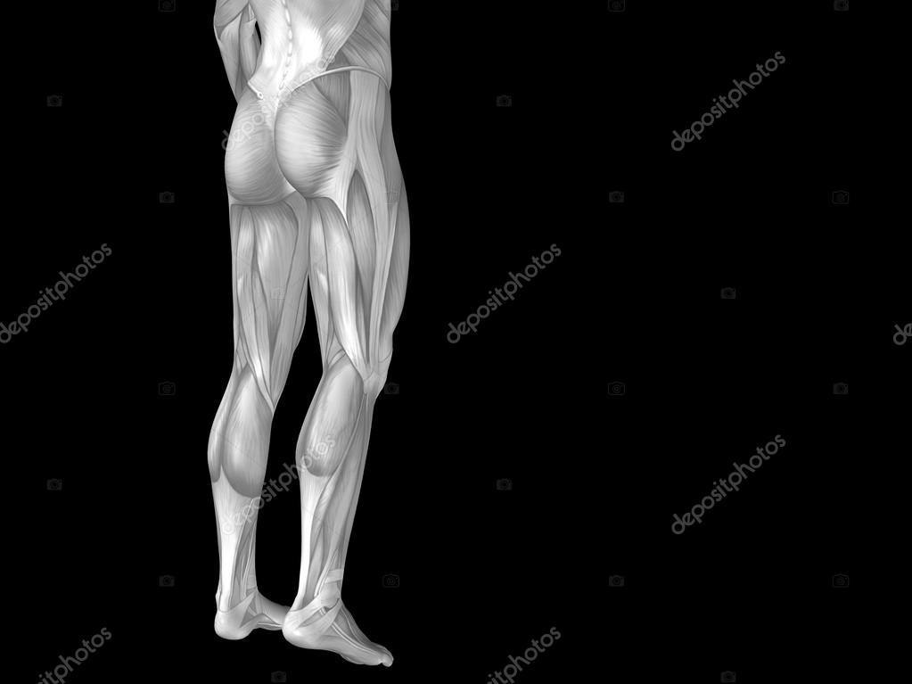 Unterkörper mit Muskeln — Stockfoto © design36 #105221838
