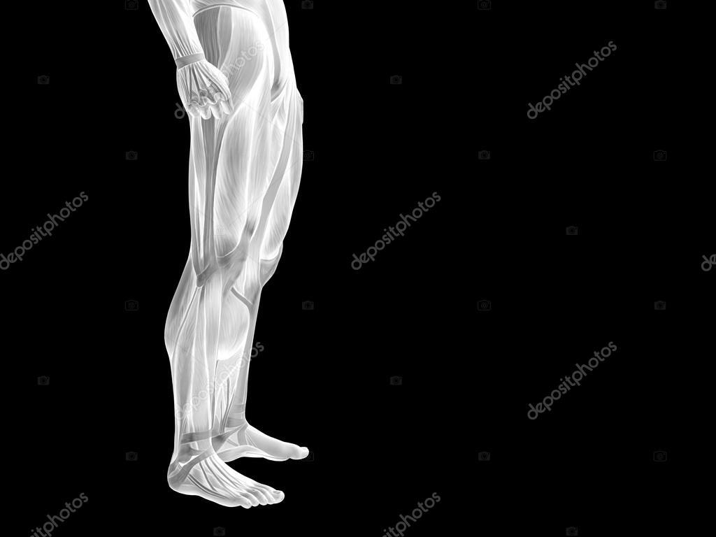 Unterkörper mit Muskeln — Stockfoto © design36 #105225596
