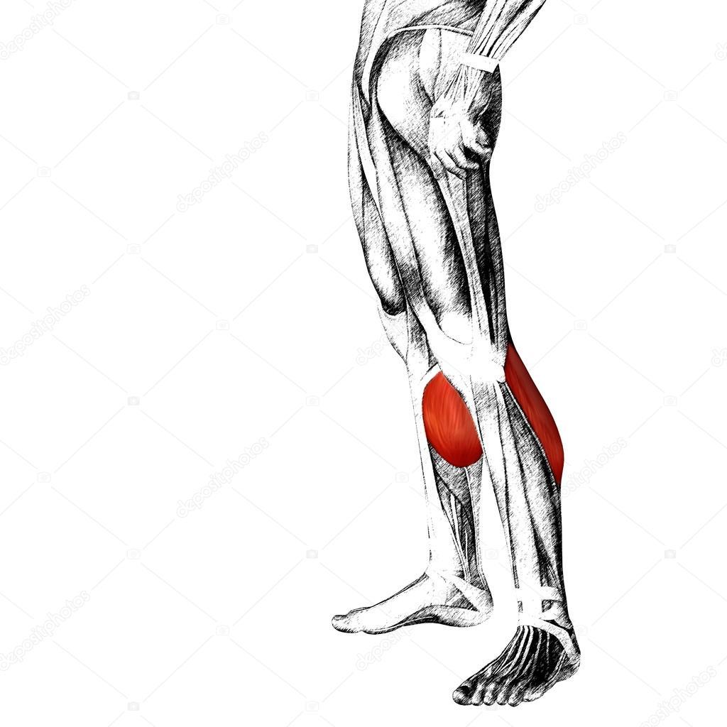 Anatomía de las piernas más baja — Fotos de Stock © design36 #105228576