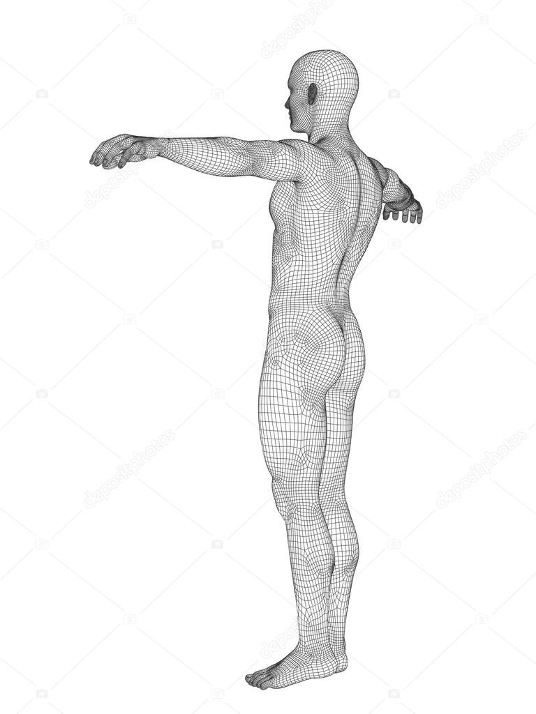 Male Anatomy Made Of White Wireframe Stock Photo Design36 105231884