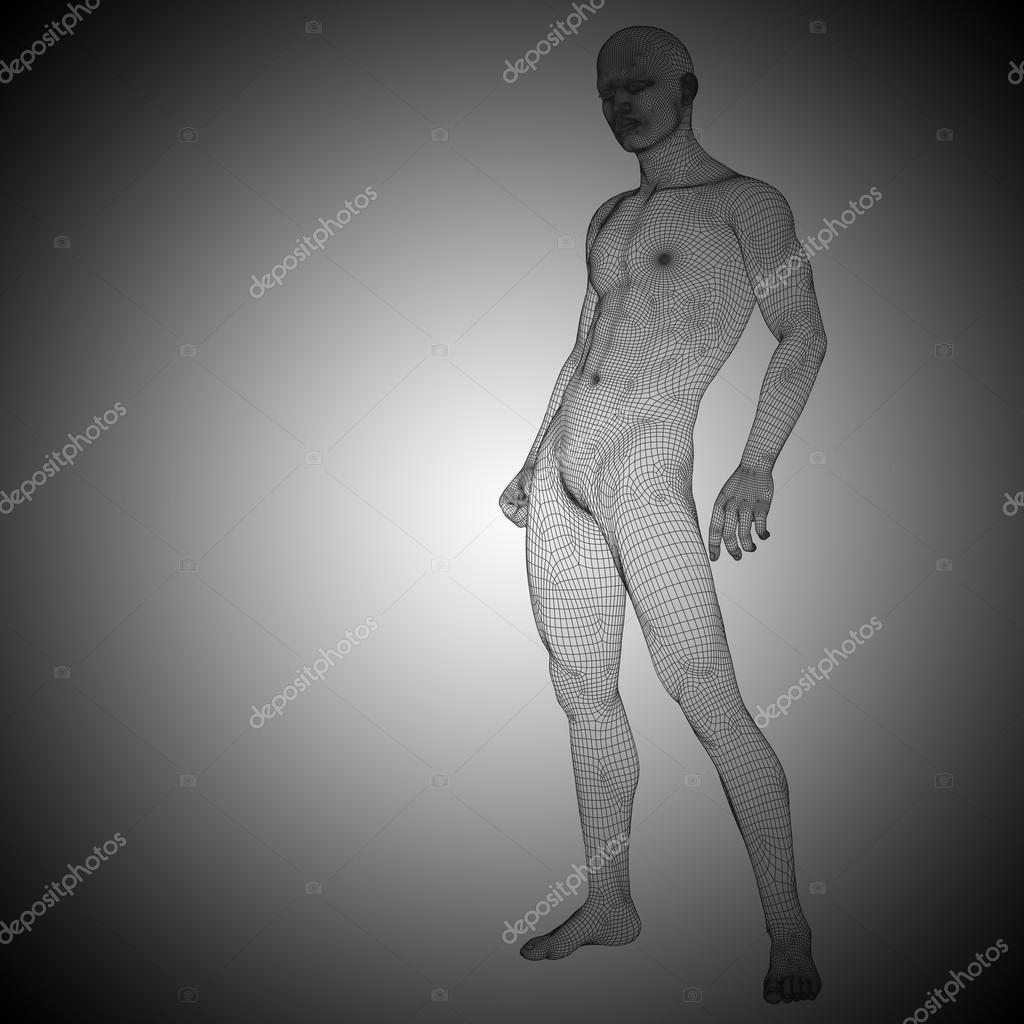 wireframe male anatomy — Stock Photo © design36 #105232024