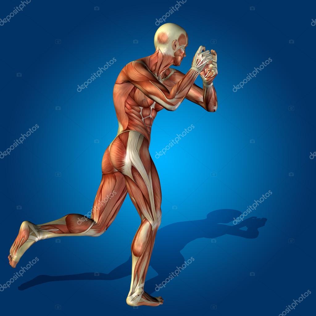 cuerpo humano fuerte con músculos — Foto de stock © design36 #105234126