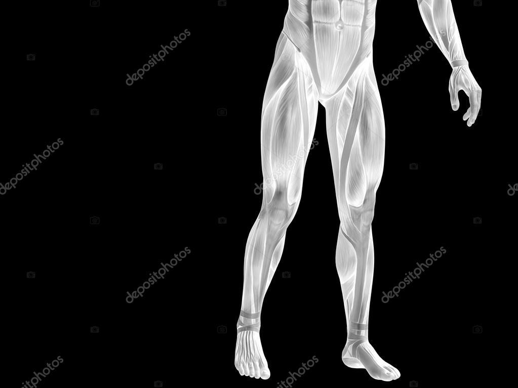 Unterkörper mit Muskeln — Stockfoto © design36 #105239484