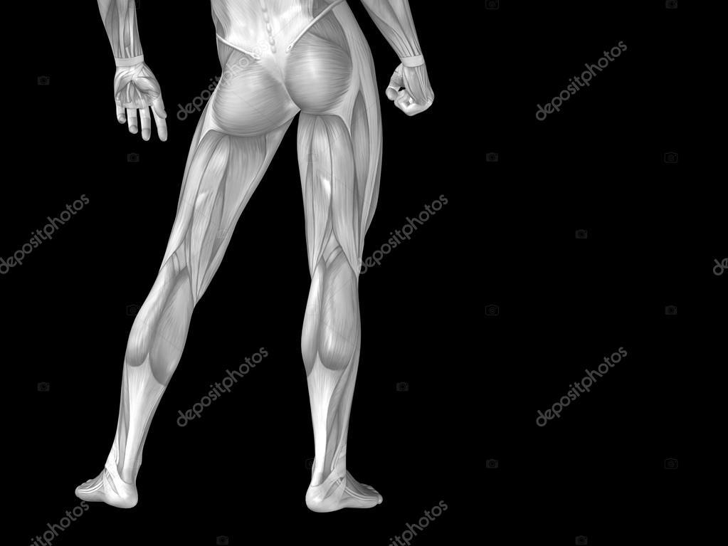 Unterkörper mit Muskeln — Stockfoto © design36 #105244052