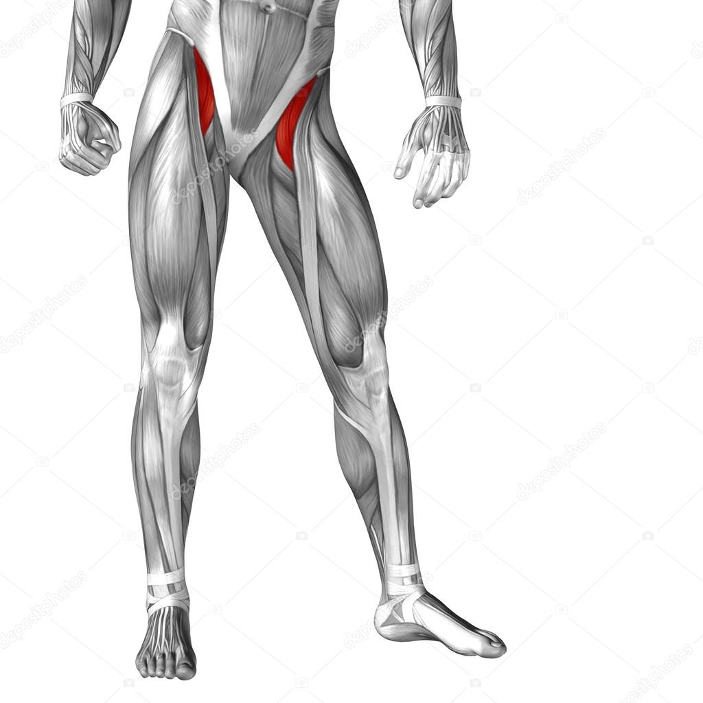 legs anatomy and muscles — Stock Photo © design36 #105244390