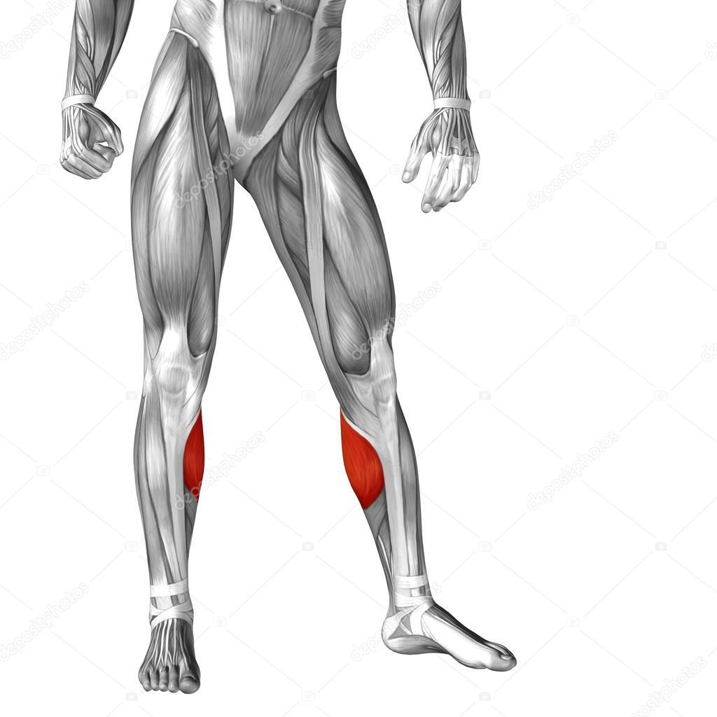 Anatomía de las piernas humanas — Fotos de Stock © design36 #105246030