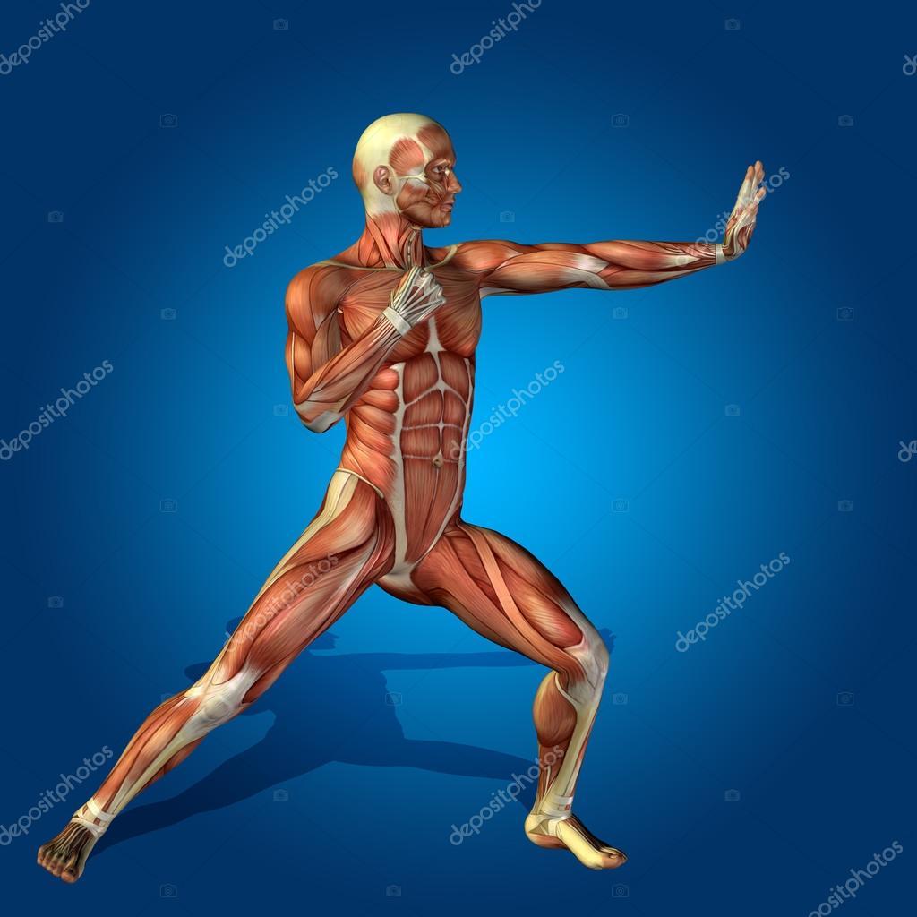 cuerpo humano fuerte con músculos — Fotos de Stock © design36 #105247722