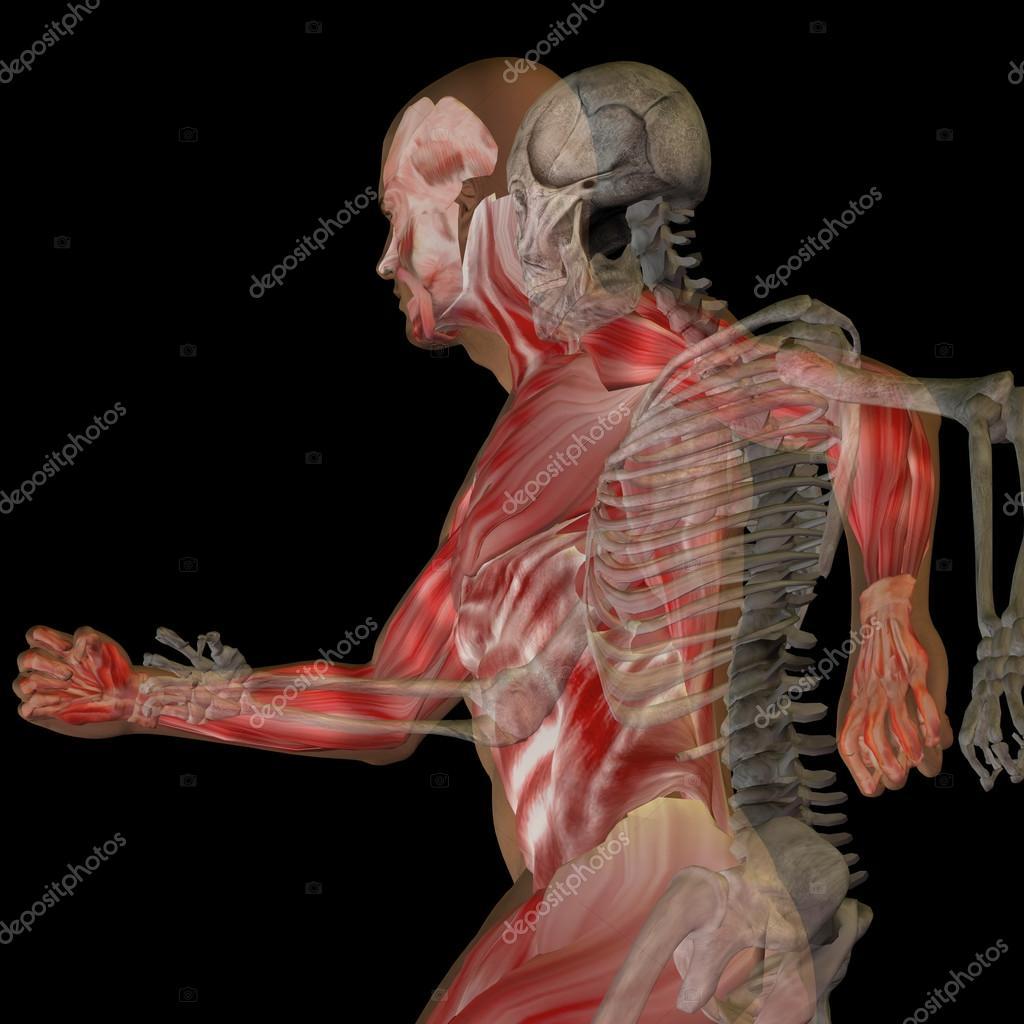conceptual anatomy with bones — Stock Photo © design36
