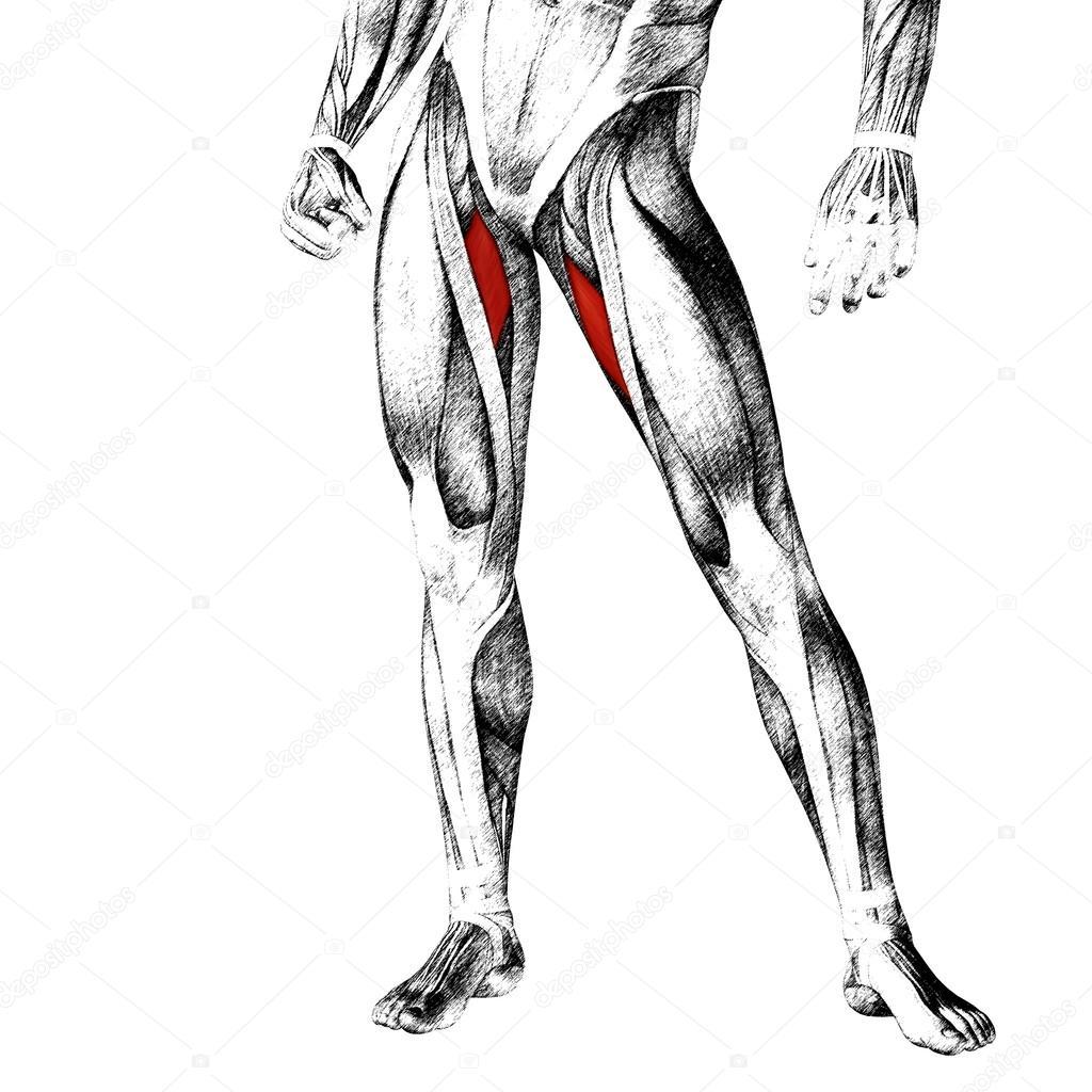 menschliche Oberschenkel — Stockfoto © design36 #108442522