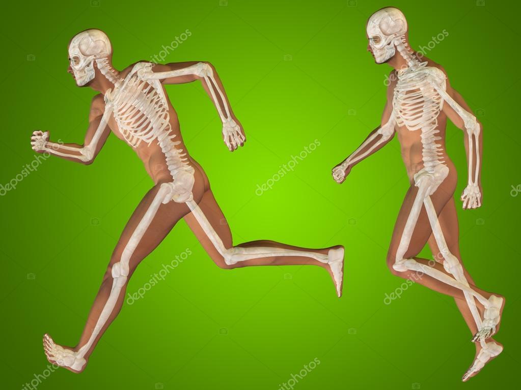 cuerpos transparentes de esqueletos masculinos anatomía — Fotos de ...