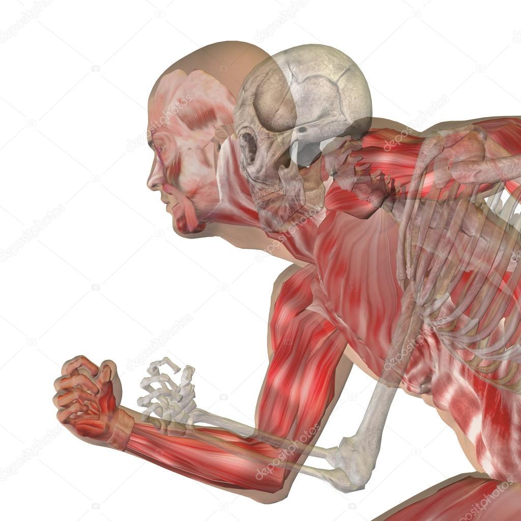 konzeptionelle Anatomie mit Knochen — Stockfoto © design36 #108443748