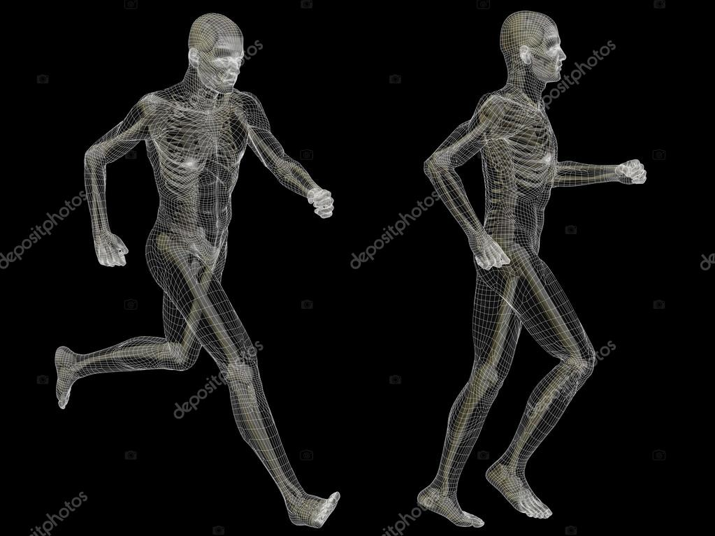 Males Anatomy Made Of White Wireframe Stock Photo Design36