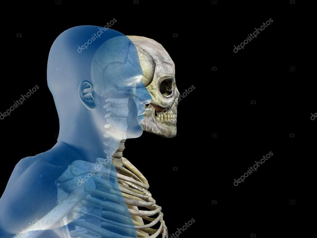 Anatomie mit Knochen und Gesicht — Stockfoto © design36 #111478874