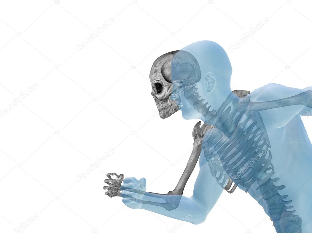 Anatomy With Bones And Face Stock Photo Design36 111481350