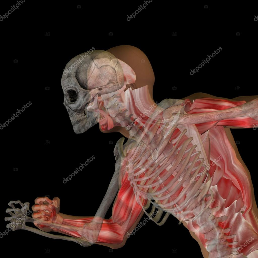 Anatomy With Bones And Face Stock Photo Design36 111760558