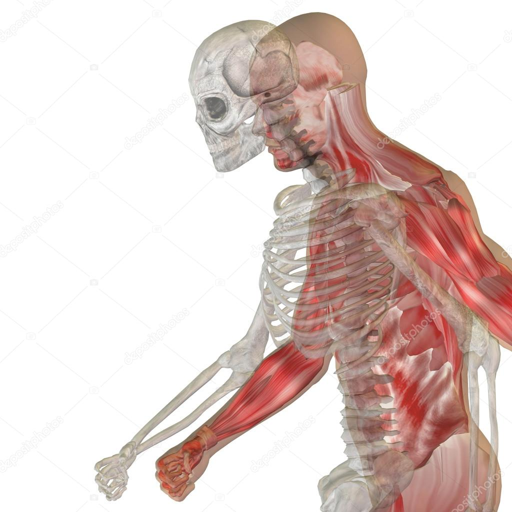 Anatomía huesos y cara — Foto de stock © design36 #111761432