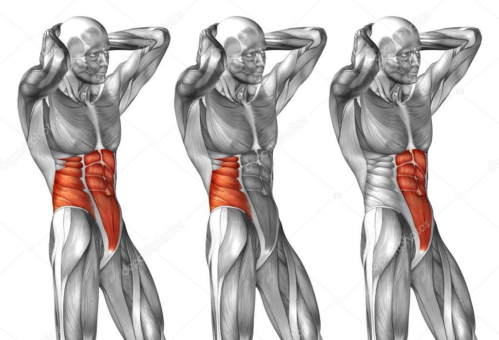 Menschliche Anatomie der Brust — Stockfoto © design36 #111761864