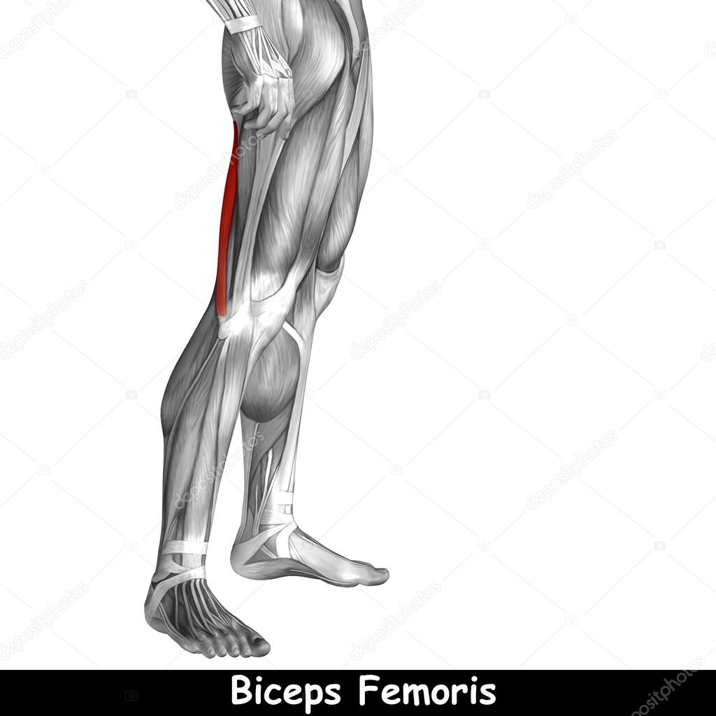 anatomía humana piernas superiores — Foto de stock © design36 #111761874