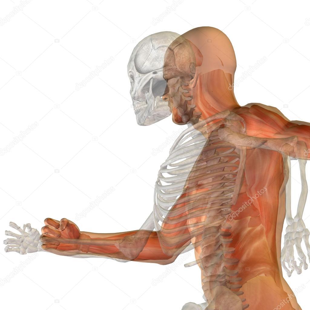 Anatomie mit Knochen und Gesicht — Stockfoto © design36 #111763696