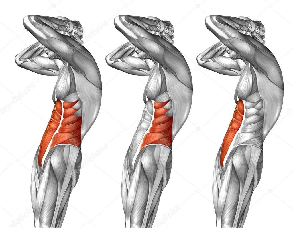 Menschliche Anatomie der Brust — Stockfoto © design36 #120115932
