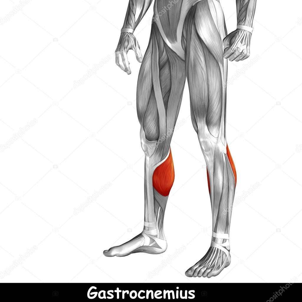 Anatomía de la pierna inferior — Foto de stock © design36 #120121670