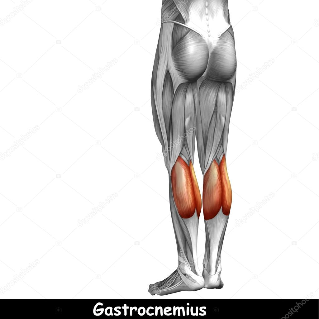 untere Bein Anatomie — Stockfoto © design36 #120124810