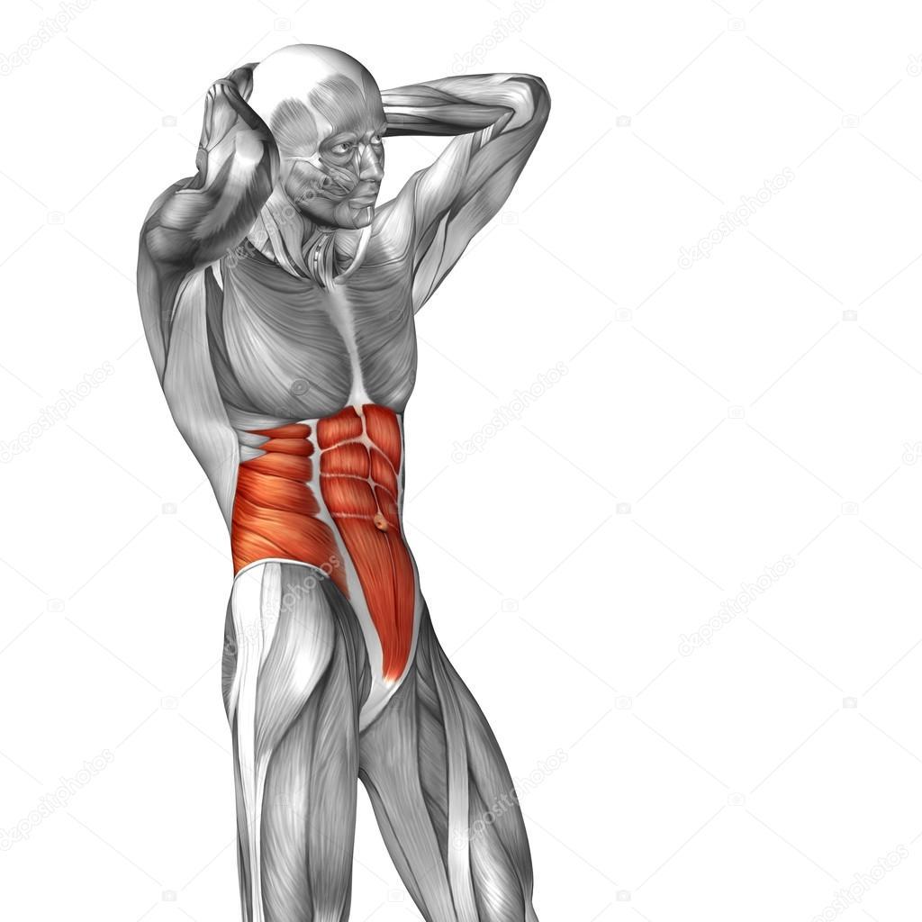 Menschliche Anatomie der Brust — Stockfoto © design36 #120134986