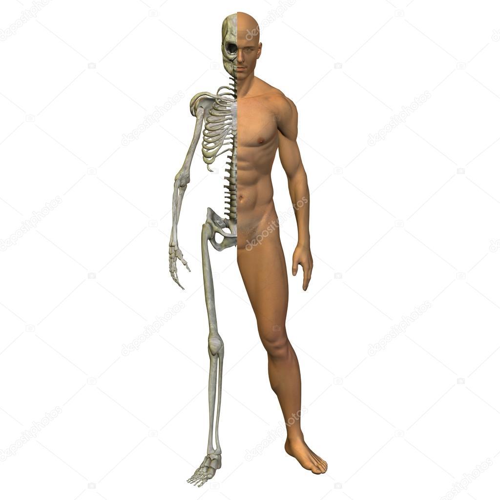 Anatomie, Körper, Brust, Kopf — Stockfoto © design36 #120144700