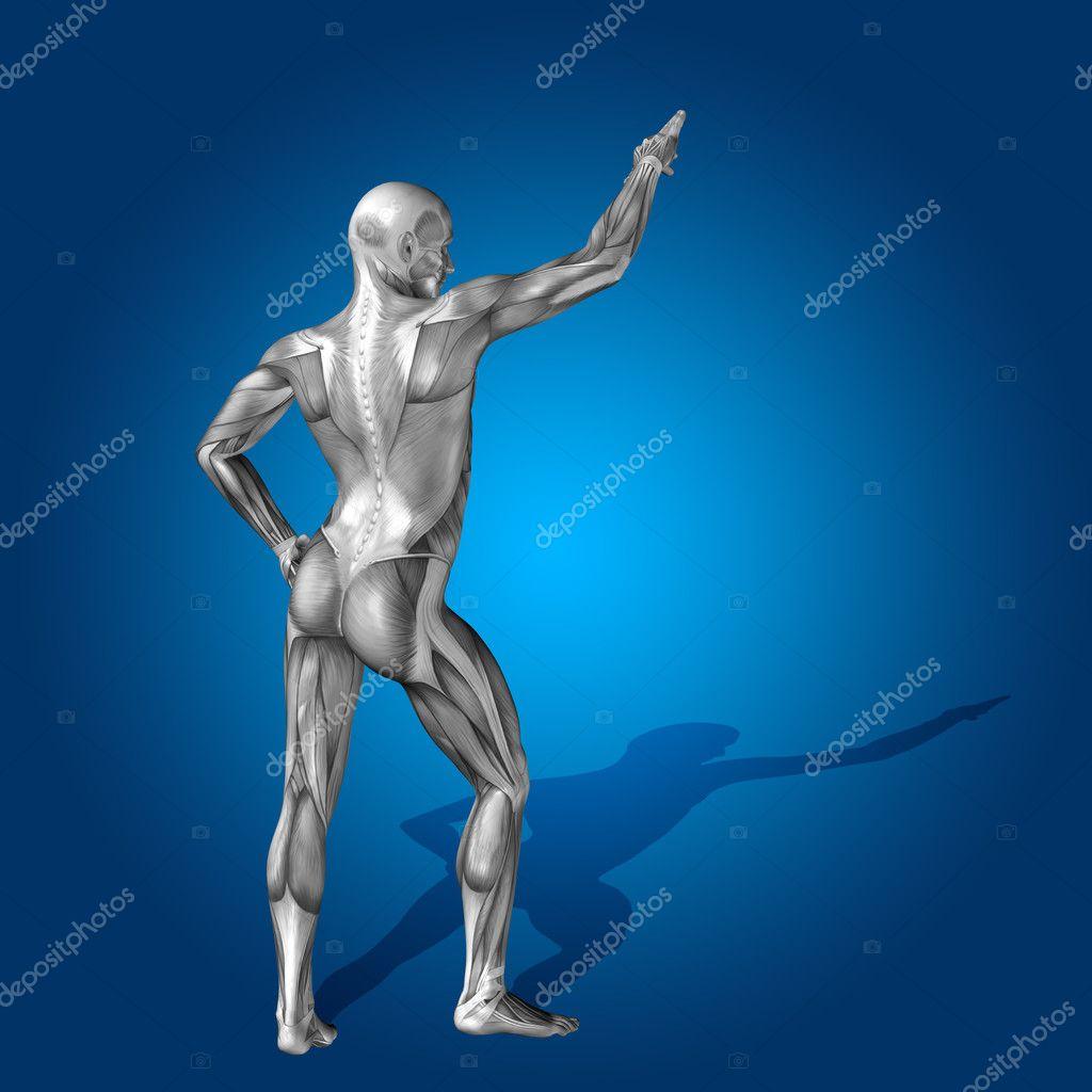 Anatomía cuerpo con músculos — Fotos de Stock © design36 #120148064