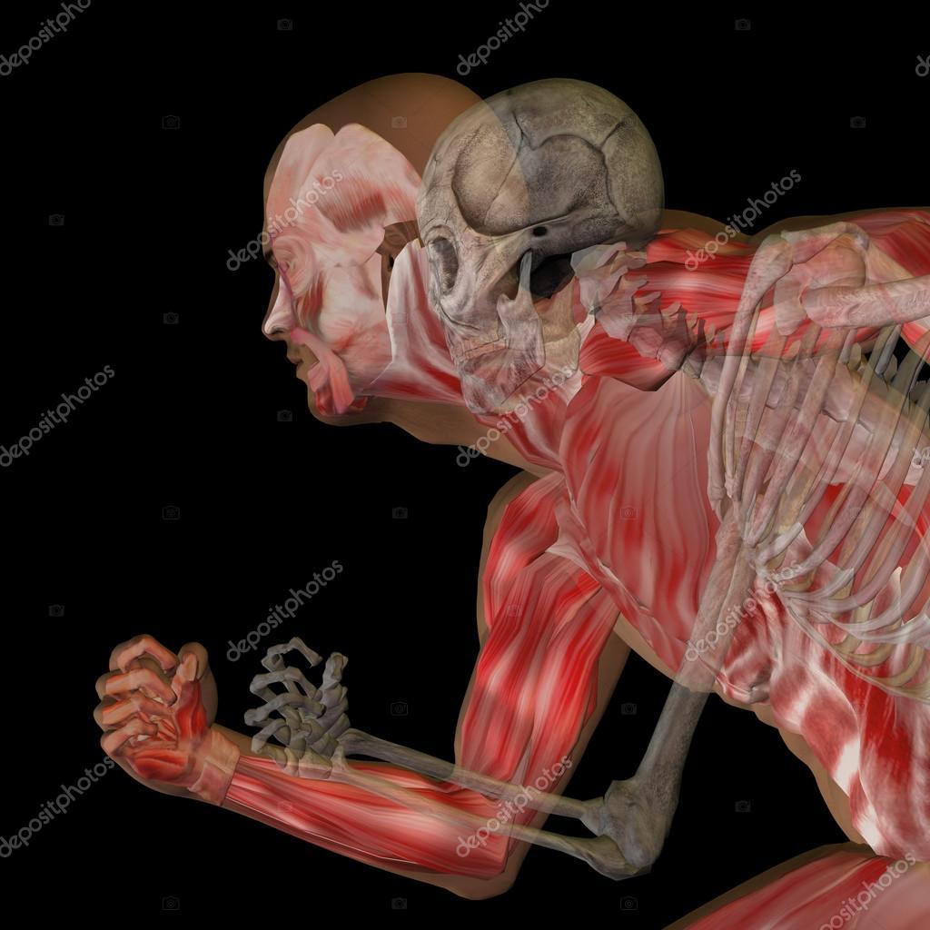Menschliche Anatomie mit Knochen — Stockfoto © design36 #120154400