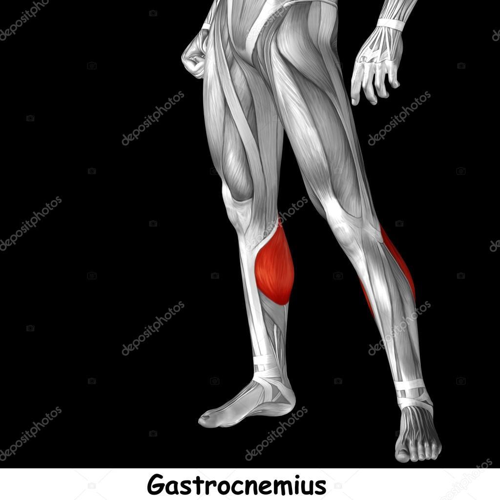 Anatomie der unteren Beine — Stockfoto © design36 #123087352