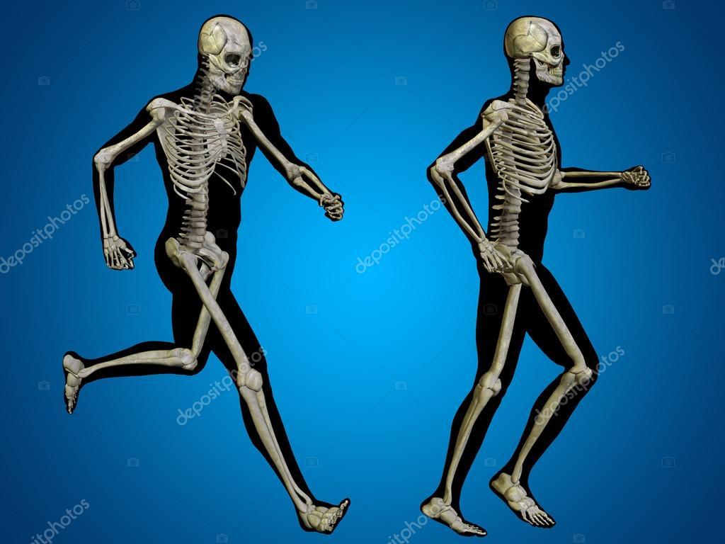 Anatomía del esqueleto humano — Fotos de Stock © design36 #123109068