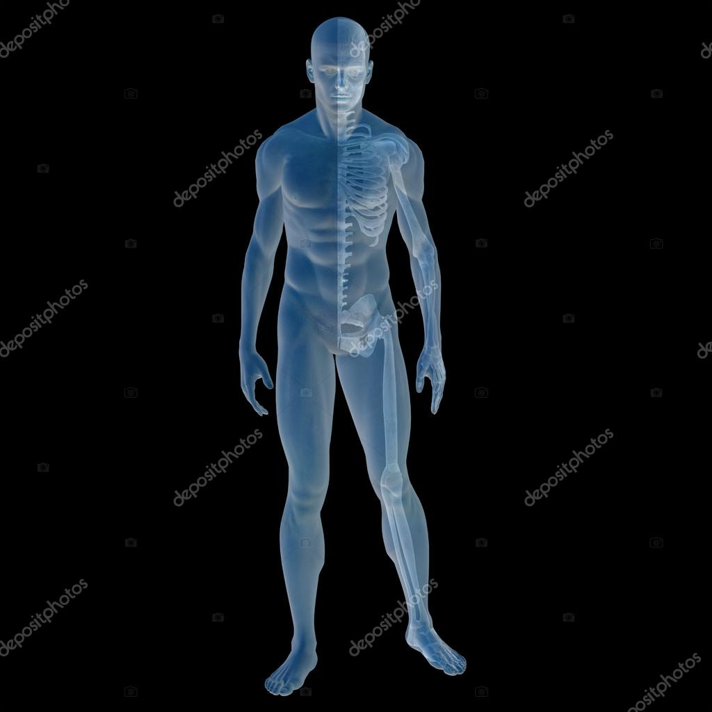 3d male anatomy with muscles and skeleton — Stock Photo © design36 ...