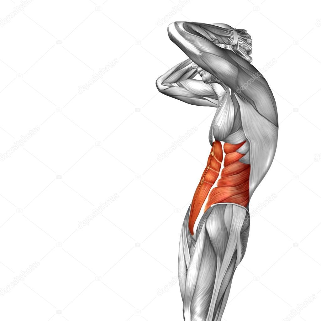 Konzept Bauch menschliche Anatomie — Stockfoto © design36 #67983545