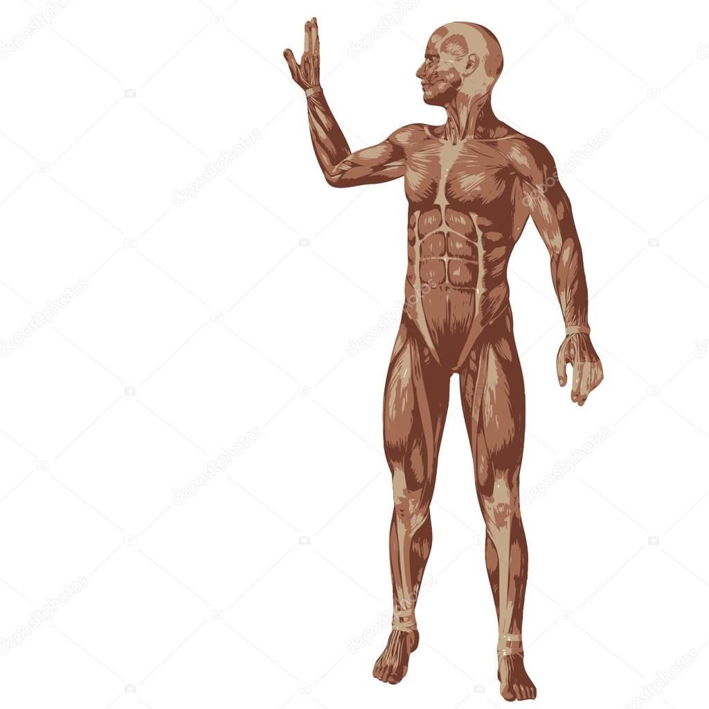 3D humanos con músculos — Fotos de Stock © design36 #67983931