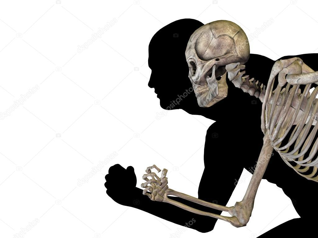 Männlichen 3d anatomie mit Knochen — Stockfoto © design36 #67984199