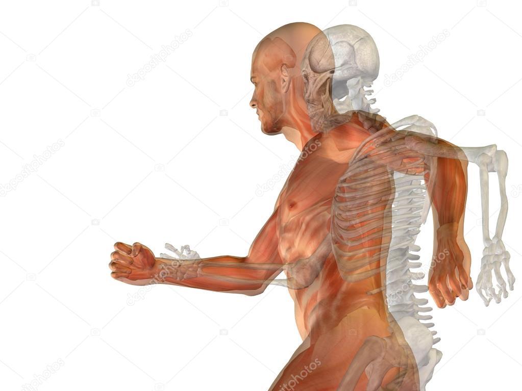 3d anatomie mit Knochen — Stockfoto © design36 #67984285