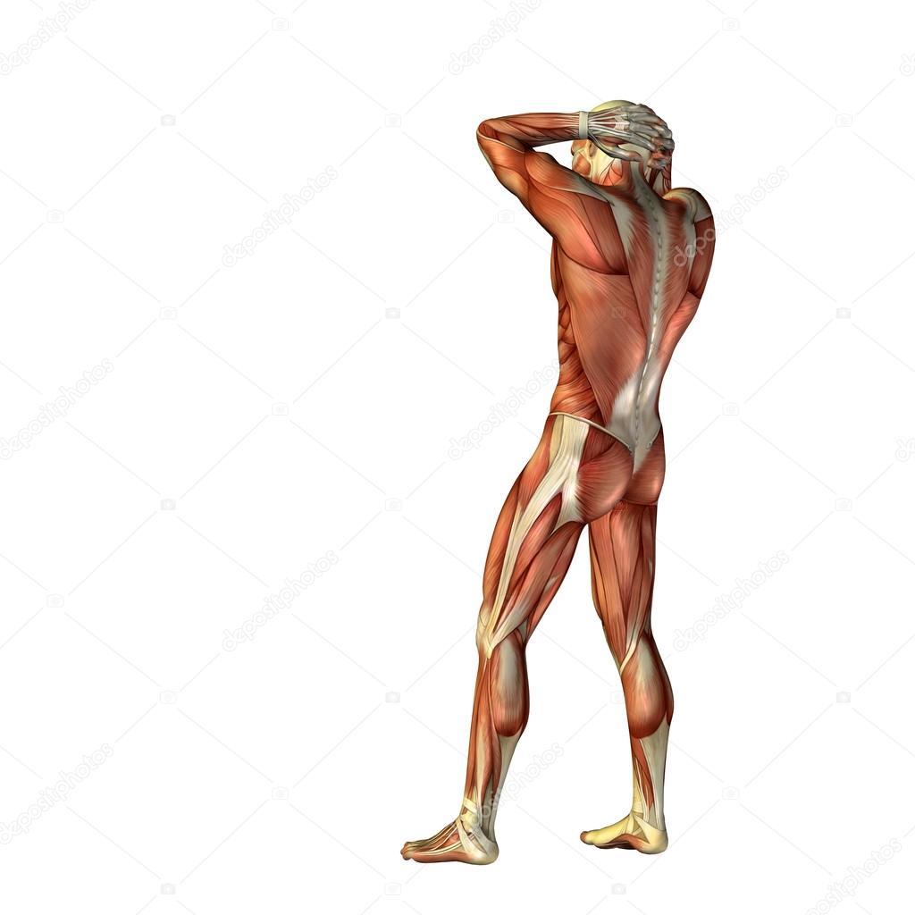 3D humanos con músculos — Foto de stock © design36 #68269771