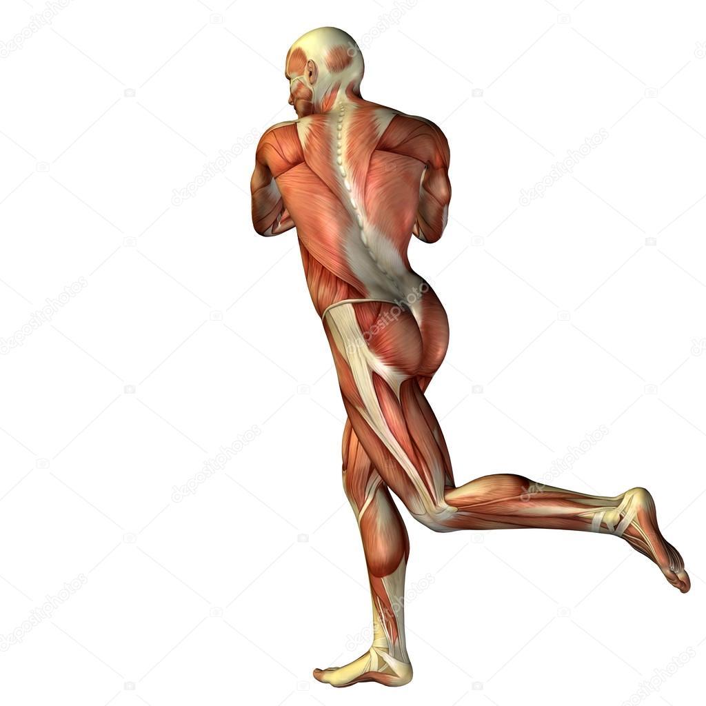 Mensch mit Muskeln für Anatomie-designs — Stockfoto © design36 #68657871
