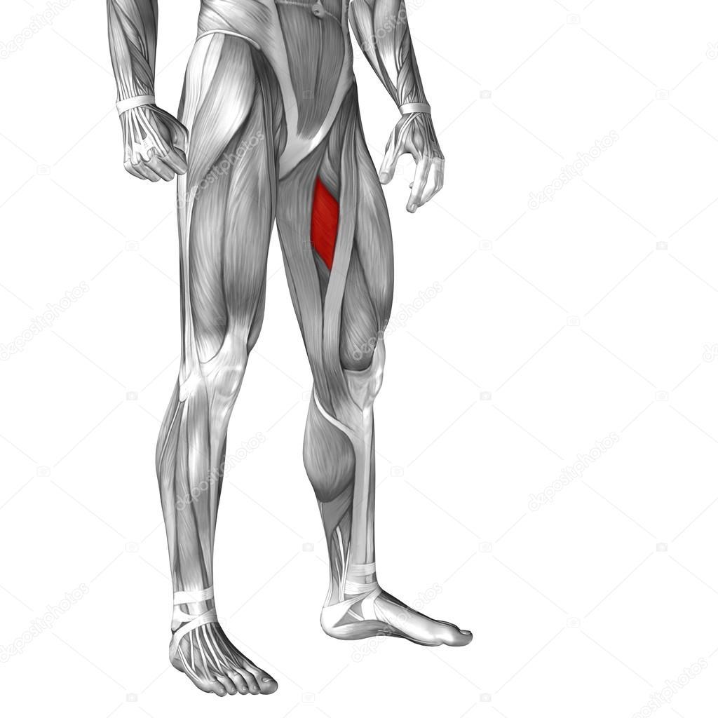 Anatomía de la pierna humana — Fotos de Stock © design36 #68658333