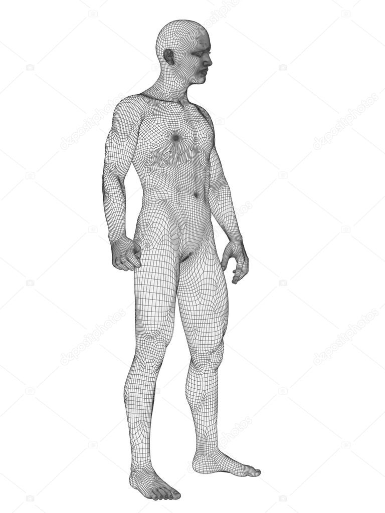 Human Anatomy Made Of Wireframe Stock Photo Design36 69286717