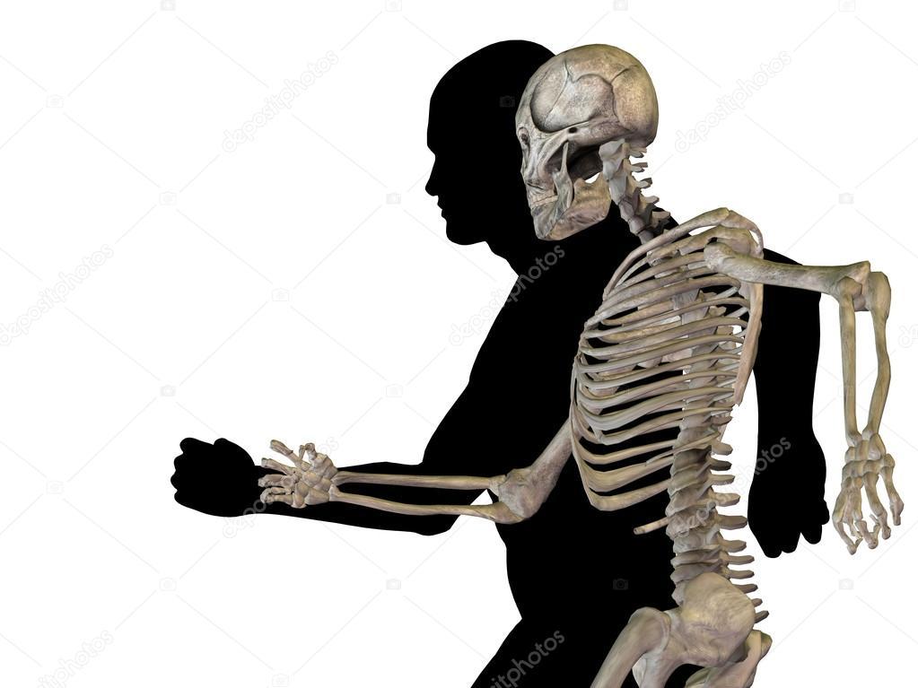 Menschliche Anatomie mit Knochen — Stockfoto © design36 #69287419