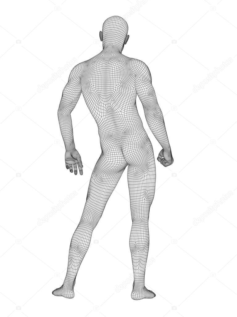 Anatomía masculina de estructura metálica — Fotos de Stock ...