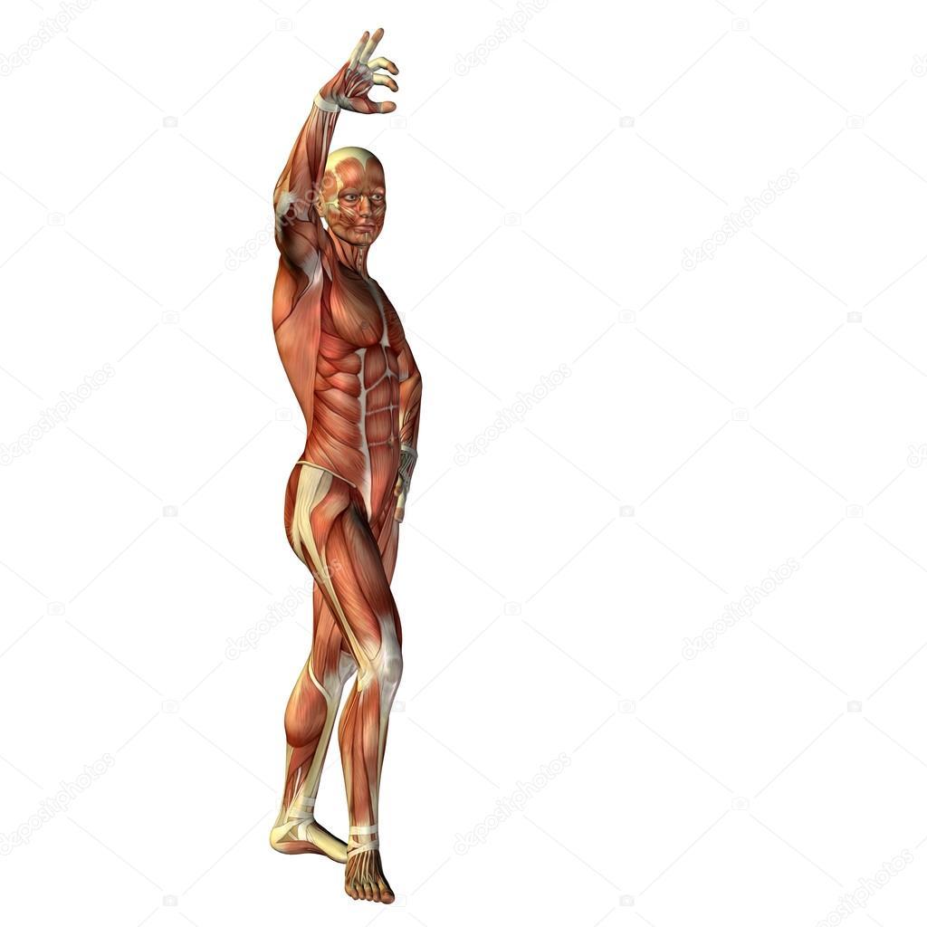 Großartig Hemikolektomie Rechts Anatomie Fotos - Anatomie Ideen ...