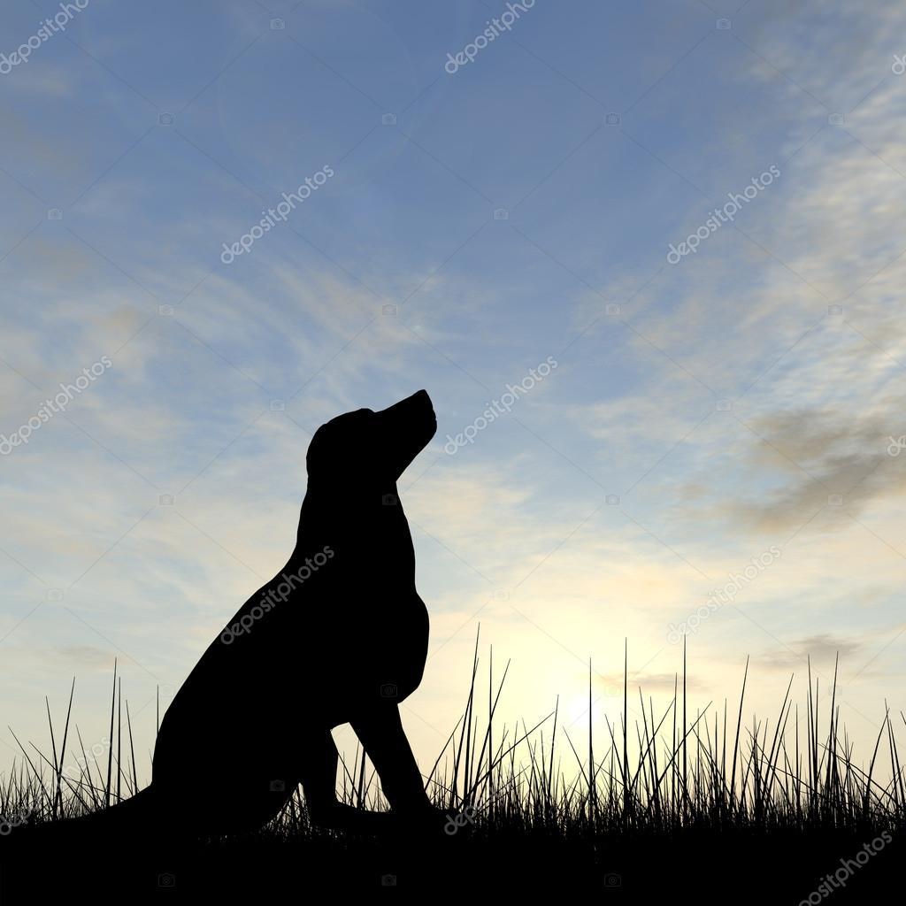 Cute dog silhouette